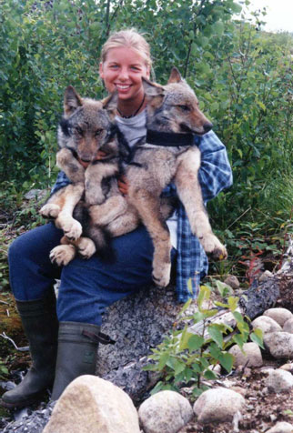 Canadian Wildlife Biologist Sophie Czetwertynski holding radio-collared wolf pups in Quebec's Laurentide Reserve.   The Reserve may serve as a source population for wolves in the northeast U.S. if they are allowed to survive and disperse.