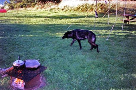 August 1993 - Northern Maine 1