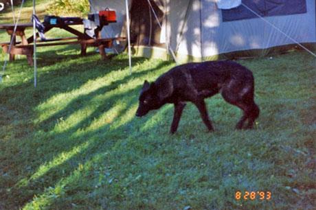 August 1993 - Northern Maine 2