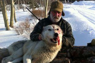 Port Blandford Wolf 2014